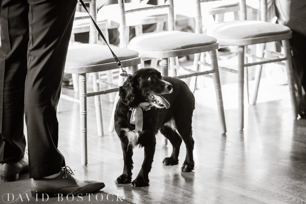The Great Barn Aynho Wedding Photographs spaniel